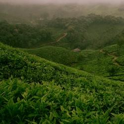 rotemuttermaleentfernen-teebaumoel